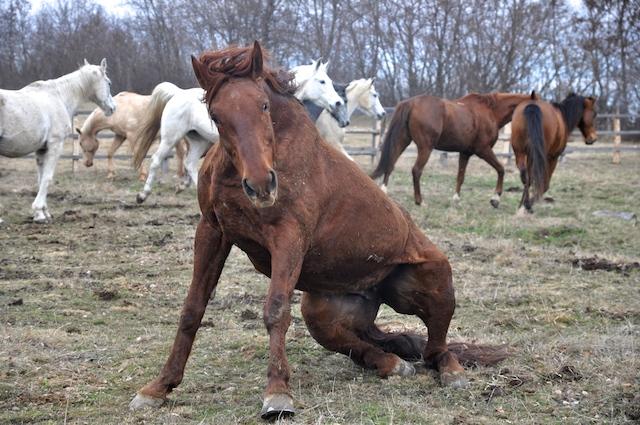 caballo en libertad: